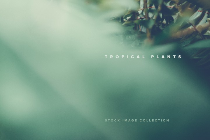 Download Tropical Plants Stock Images