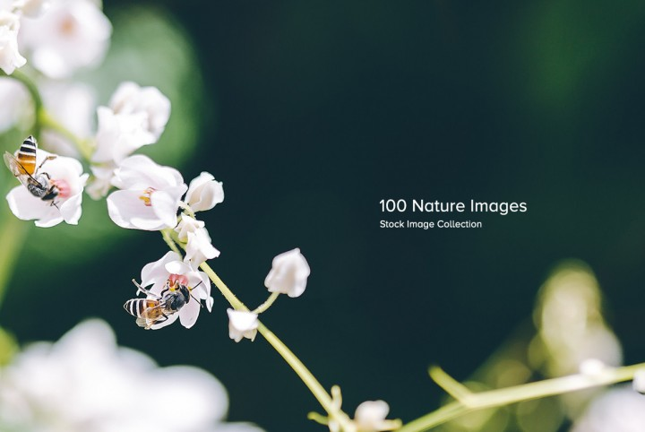 100 Nature Images for $39